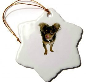 3dRose Dogs Chihuahua - Long Hair Chihuahua - 3 inch Snowflake Porcelain Ornament (orn_880_1)