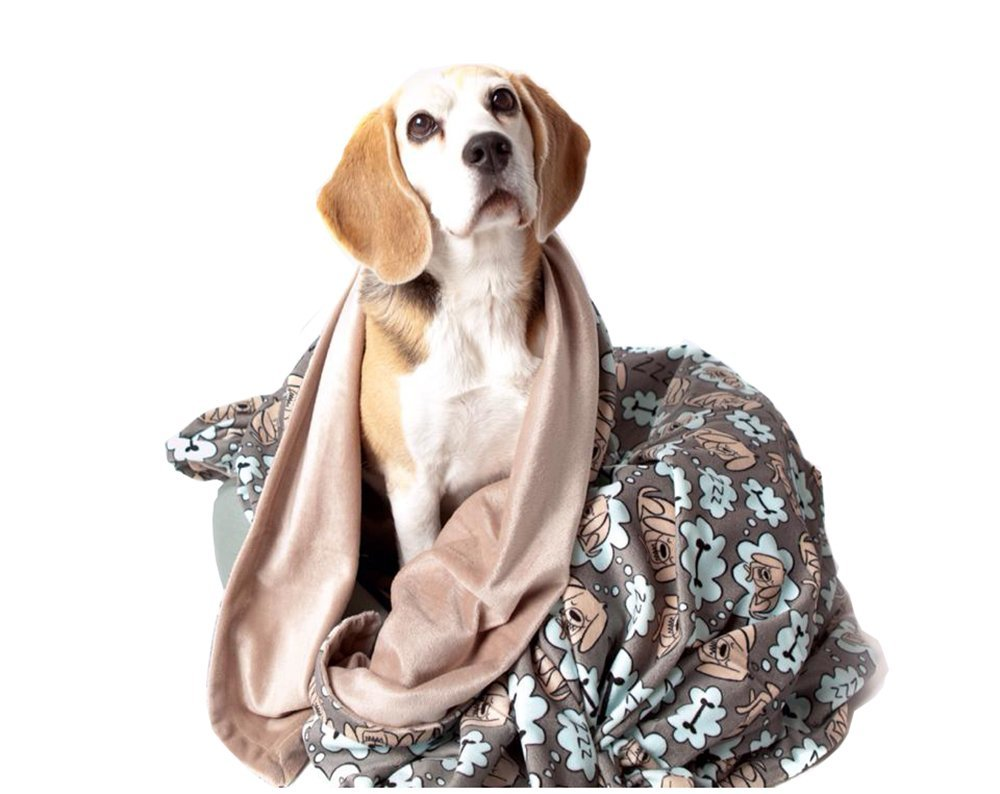 3e38798544836 UTEX Premium Microfiber Pet Blanket, for Small/Medium/Large Dogs, Puppy  Kitten Bed, Warm, Soft, Plush