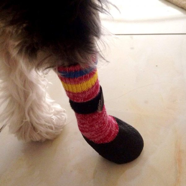 Alfie Pet by Petoga Couture - Brett Set of 4 Rubber Dipped Dog Paw Protection Socks - Color- Red, Size- XS 3