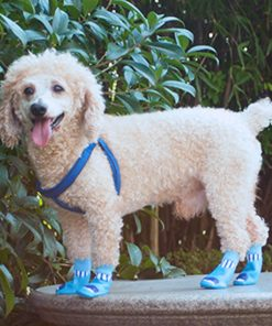 Alfie Pet by Petoga Couture - Michal Set of 4 Rubber Dipped Dog Paw Protection Socks 2