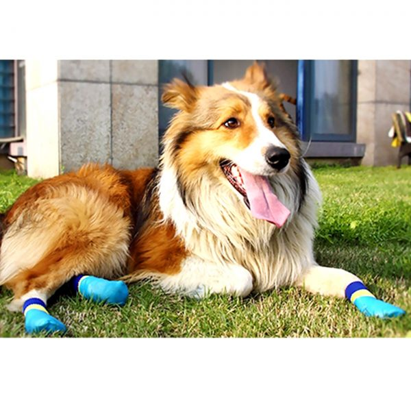 Alfie Pet by Petoga Couture - Terry Set of 4 Rubber Dipped Dog Paw Protection Socks - Color- Blue, Size- XXS 2