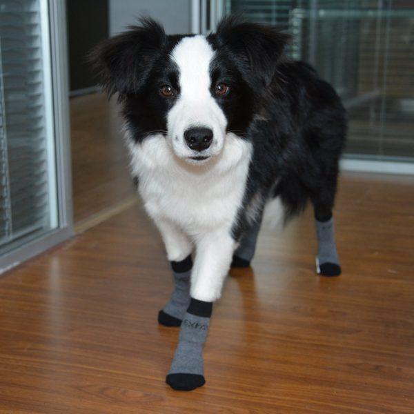 EXPAWLORER Dog Socks Traction Control Anti-Slip for Hardwood Floor Indoor Wear, Paw Protection Grey. 6