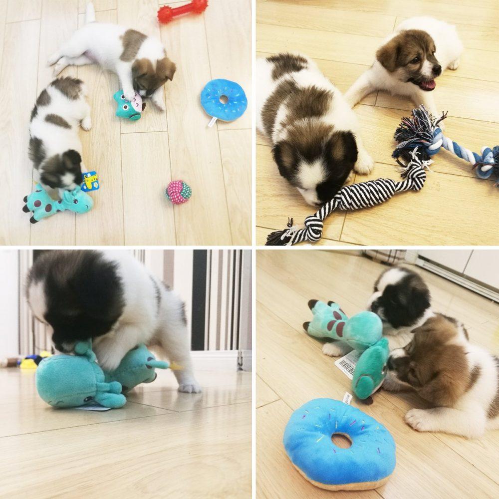 buibiiu Dog Toys Small Dog Chew Toys Dog Teething Toys Squeaky Toys Chihuahua