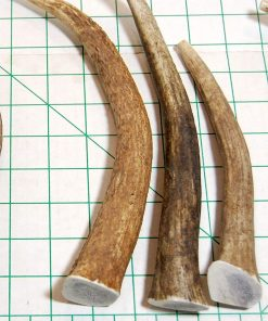 Big Dog Antler Chews 3-Pack Elk Antler Dog Chews, Medium Tines, 6 inches to 10 inches Long, for Small to Medium Sized Dogs and Puppies Brand 3