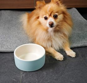 Magisso Happy Pet Project Naturally Cooling Ceramics Water Bowl (Blue, 6 Inch)