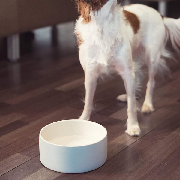 Magisso Happy Pet Project Naturally Cooling Ceramics Water Bowl (Blue, 6 Inch) 7