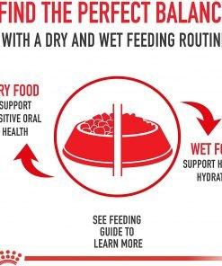 Royal Canin Size Health Nutrition Mini Mature 8+ Dry Dog Food 7