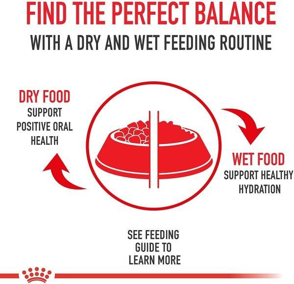 Royal Canin Size Health Nutrition Mini Weight Care Dry Dog Food 7