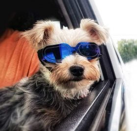 Enjoying Small Dog Sunglasses - Dog Goggles for UV Protection Sunglasses Windproof with Adjustable Band for Puppy Doggy Cat 2