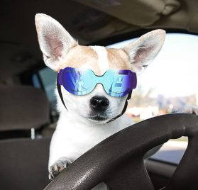 Namsan Stylish and Fun Pet Dog Puppy UV Goggles Sunglasses Waterproof Protection Sun Glasses for Dog