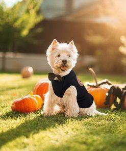 Ruizik Halloween Costumes for Small Dogs,Small Dog Tshirts Female Male,Halloween Pumpkin Dog Shirt,Halloween Costumes for xs Puppies,Small Dog Outfit 5