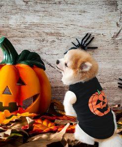 Ruizik Halloween Costumes for Small Dogs,Small Dog Tshirts Female Male,Halloween Pumpkin Dog Shirt,Halloween Costumes for xs Puppies,Small Dog Outfit 6