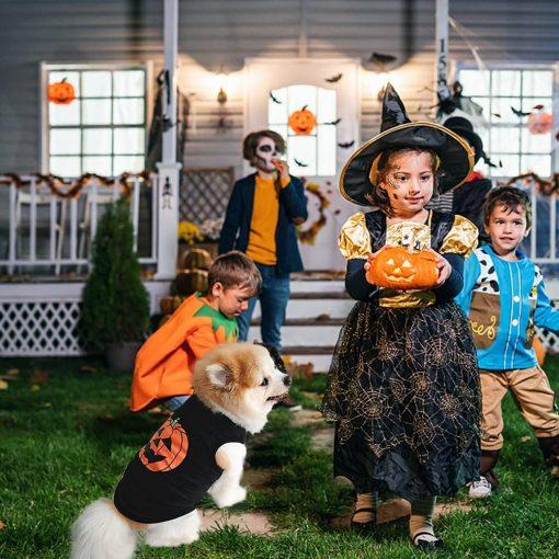 Ruizik Halloween Costumes for Small Dogs,Small Dog Tshirts Female Male,Halloween Pumpkin Dog Shirt,Halloween Costumes for xs Puppies,Small Dog Outfit 7