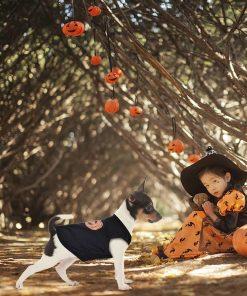 Ruizik Halloween Costumes for Small Dogs,Small Dog Tshirts Female Male,Halloween Pumpkin Dog Shirt,Halloween Costumes for xs Puppies,Small Dog Outfit 8